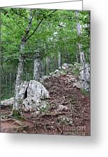 Deep Forest Rocky Path Nature Greeting Card