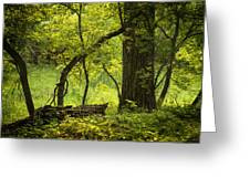 Deep Forest Scenic Greeting Card