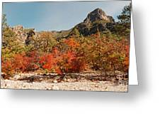 Deep In Mckittrick Canyon - Lost Maples And Ponderosa Pines Against Backdrop Of Guadalupe Mountains  Greeting Card