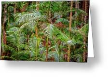 Deep In The Forest, Tamborine Mountain Greeting Card