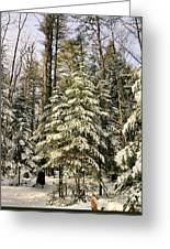 Deep In The Maine Woods Greeting Card