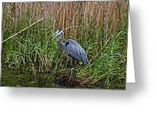 Deep In The Swamps Greeting Card