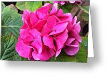 Deep Pink Greeting Card