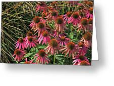 Deep Pink Echinacea Straw Flowers Green Leaf And Grass Background 2 9132017 Greeting Card