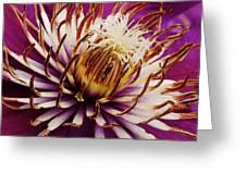 Deep Purple Clematis Greeting Card