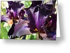 Deep Purple Irises Dark Purple Irises Summer Garden Art Prints Greeting Card