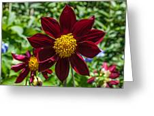 Deep Red And Yellow Flowers Greeting Card