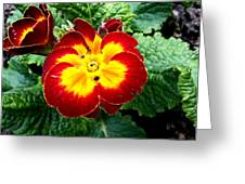 Deep Red Bright Yellow Greeting Card