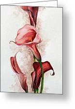 Deep Red Callas Greeting Card