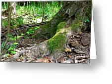 Deep Roots Greeting Card