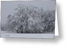 Deep Winter Greeting Card