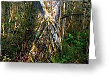 Deep Woods Greeting Card