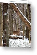 Deep Woods Deer Greeting Card