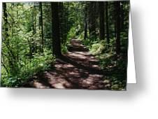 Deep Woods Road Greeting Card