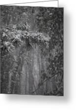 Deep Woods Snow Greeting Card