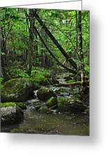Deep Woods Stream 3 Greeting Card