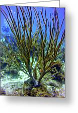 Deepwater Gorgonia Greeting Card