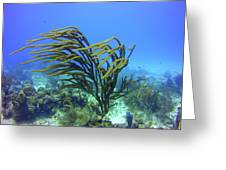 Deepwater Gorgonia Just Flowing In The Wind Greeting Card