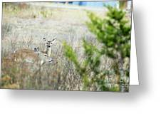 Deer 005 Greeting Card