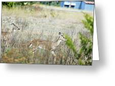 Deer 006 Greeting Card
