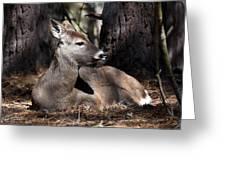 Deer 336 Greeting Card