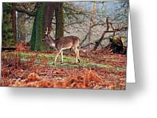 Deer Among The Ferns Greeting Card