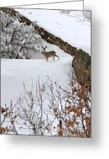 Deer At Castlewood Canyon Greeting Card