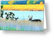Deer At Sunset Greeting Card