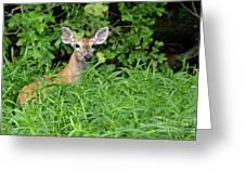 Deer Beauty II Greeting Card