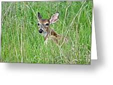 Deer Bedded Down During Mid Day Greeting Card