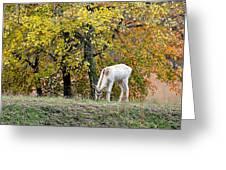 Deer Boy Greeting Card
