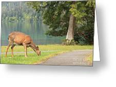 Deer By Crescent Lake Greeting Card