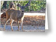 Deer Doe - 1 Greeting Card
