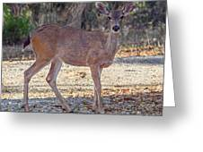 Deer Doe - 2 Greeting Card