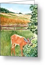 Deer Eating Leaves Greeting Card