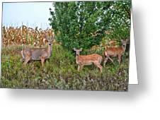 Deer Family Greeting Card