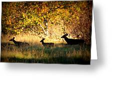 Deer Family In Sycamore Park Greeting Card by Carol Groenen