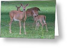 Deer Family Out For Evening Stroll Greeting Card