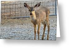 Deer Fawn - 1 Greeting Card
