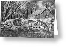 Deer Field  Greeting Card