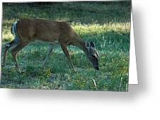 Deer Fields Greeting Card