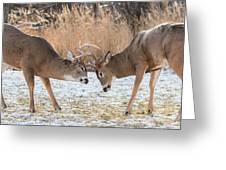 Deer Fight Greeting Card