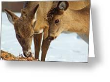 Deer Friends Greeting Card