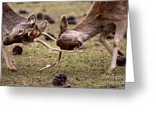 Deer Games Greeting Card