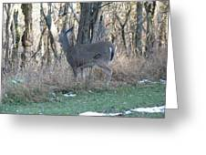 Deer Going Greeting Card