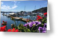 Deer Harbor By Day Greeting Card
