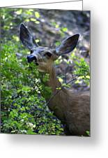 Deer Having Lunch Greeting Card