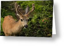Deer II Greeting Card