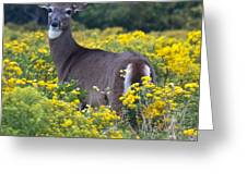 Deer In A Field Of Yellow Flowers Greeting Card
