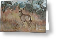 Deer In A Field Greeting Card